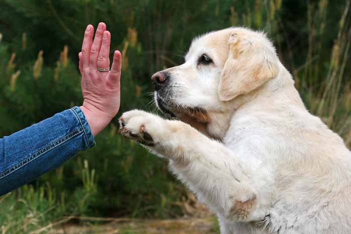 Sensitive Tierkommunikation Tiergespräch Telepathie Spiegel Body Scan