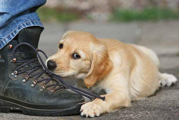 FAQ Häufig gestellte Fragen Ganzheitliche Tiergesundheit Tierkommunikation Tierenergetik