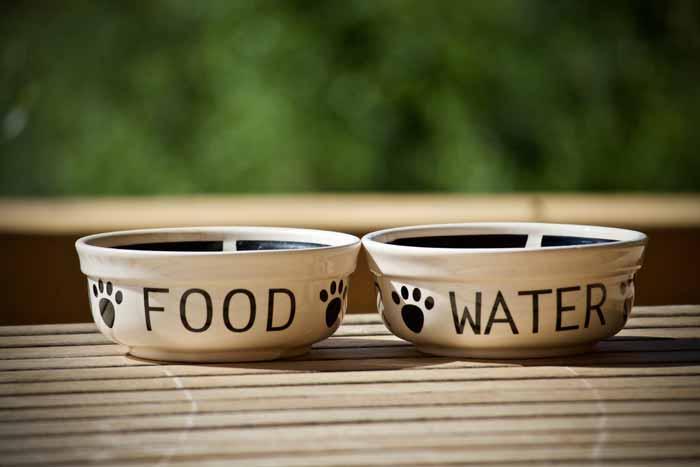 Zwei Hundenäpfe mit Aufschriften Food/Futter und Water/Wasser Ernährungsberatung Ernährung BARF Hunde