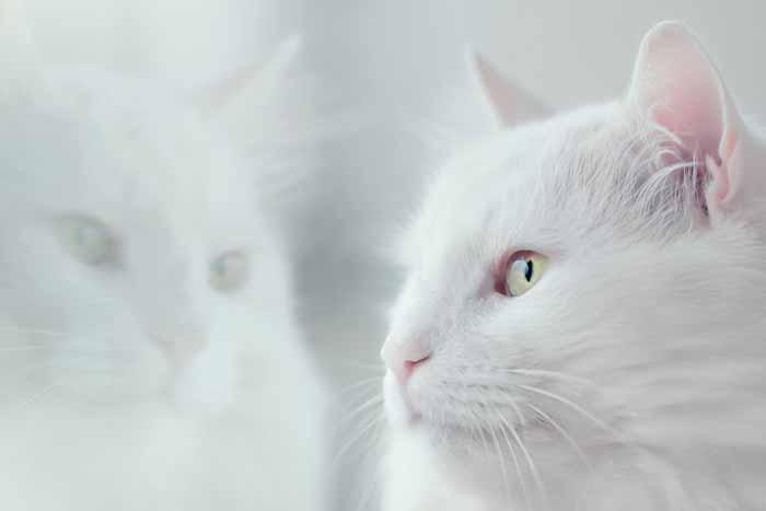 Weiße Katze spiegelt sich im Fenster Sterbebegleitung einfühlsame Begleitung Energiearbeit Sterben Tod tot leiden Angst Tierkommunikation