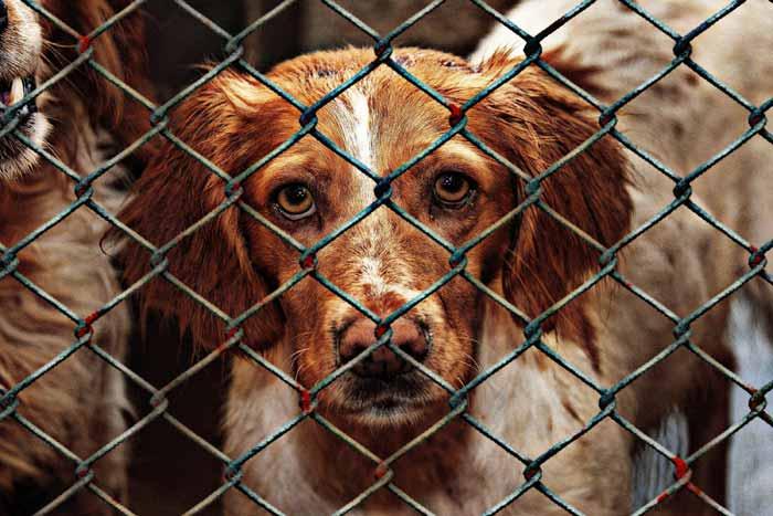 Hund schaut durch Gitter Zaun Trauma Traumata traumatisierte Tiere Tierheim Tierschutz